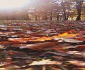 Sao Mộc trong Bảo Bình 2020-2021: Chiếu sáng góc nhìn đa chiều